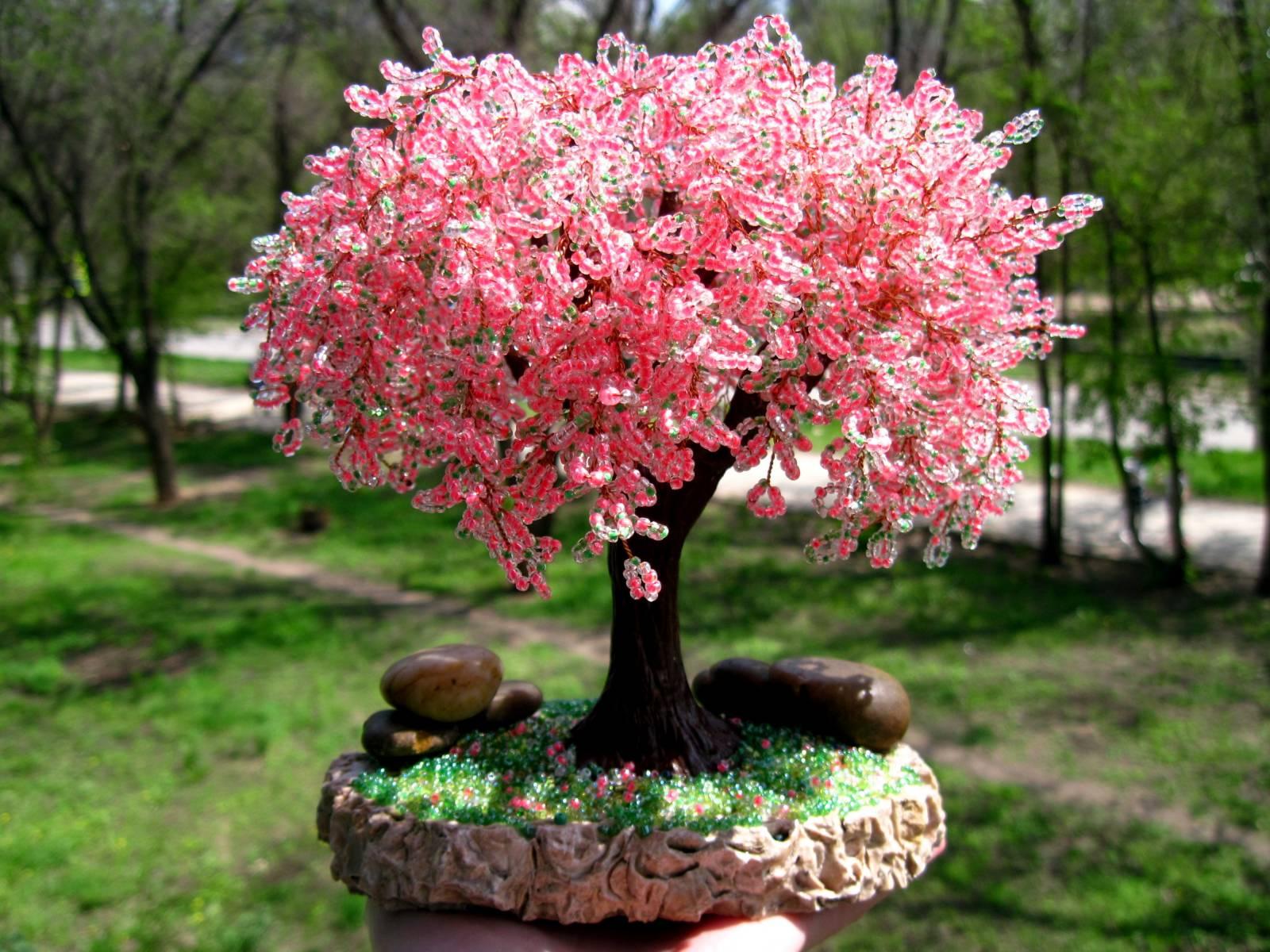 Красивая цветущая сакура