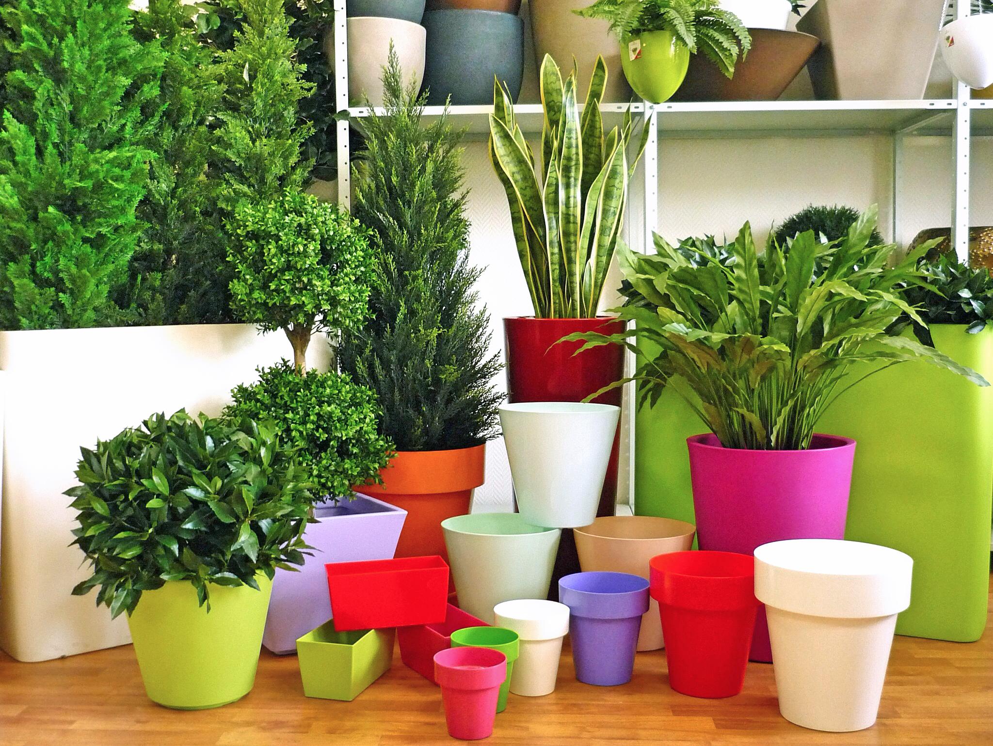 Выбираем комнатное растение